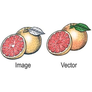 vector artwork 7